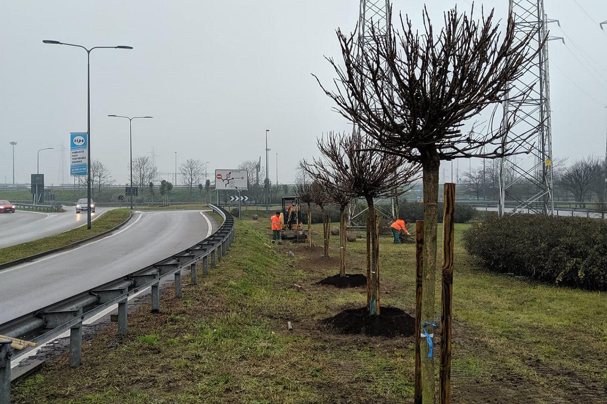 , Piantati 100 nuovi alberi alla Barona davanti all'Ospedale San Paolo